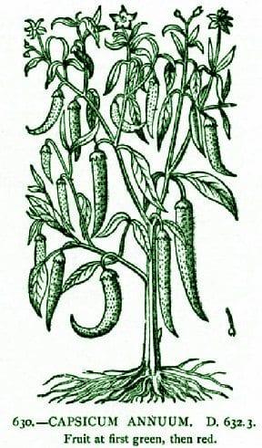 Cayenepepper-1