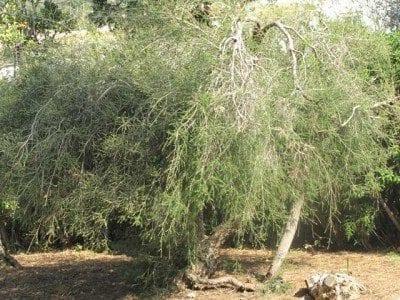 TT Tree Bush Example