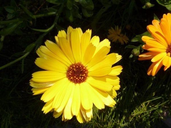 Minor Burns: Herbal 1st Aid