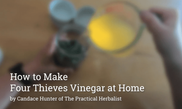 Four Thieves Vinegar Recipe & How to Make at Home Video
