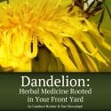 Dandelion: Herbal Medicine Rooted In Your Front Yard Is Available On Amazon