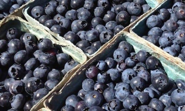 Antioxidant Rich Smoothie Blend