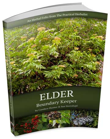 Elder: Boundary Keeper Is Now Available On Amazon!