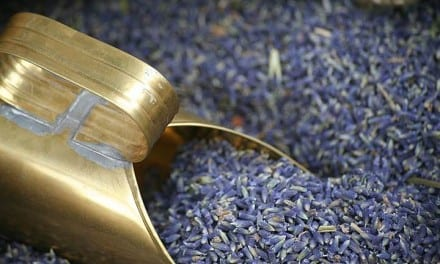 10.Lavender – Perfume with a Medicinal Punch