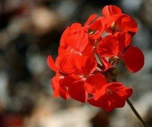 Aphrodisiac Aromatherapy Blend