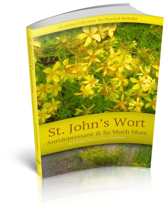 Saint John's Wort Is In!