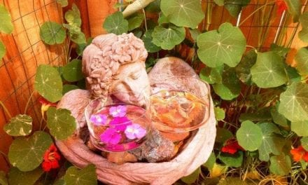 24.The Path to Flower Essences & Energetic Healing with Patti Leahy