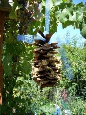 Pine Cone Bird Feeder