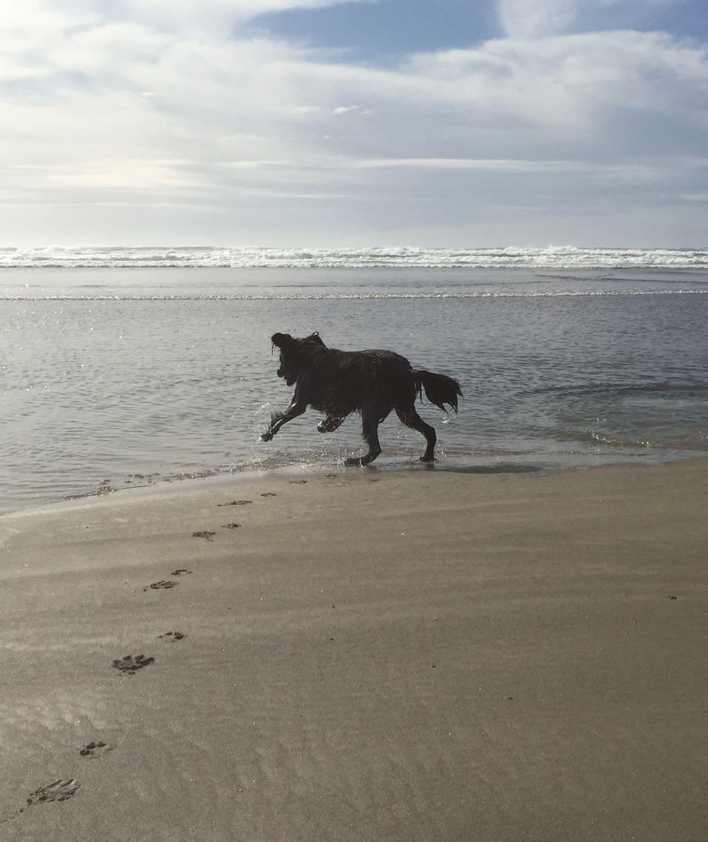 Happy Dog On Beach