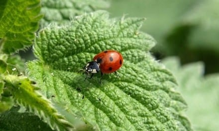 37.Awakening to Herbalism with Demetria Clark