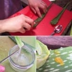 How to Harvest Aloe Vera