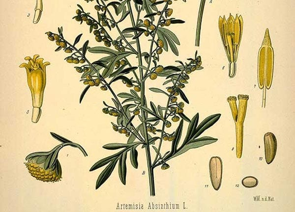 Show 54: How To Choose An Herbal Study Course
