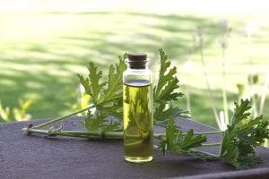 rose-geranium-herbal-oil