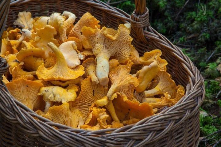 62.Mushroom Medicine with Peter McCoy