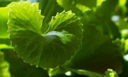 Gotu Kola ~ Herb of Adaptation and Connection