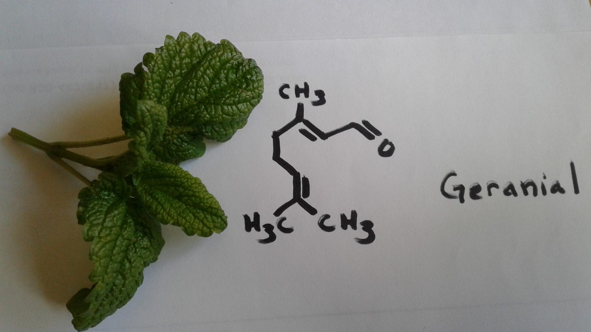 Geranial From Lemon Balm – How It Works