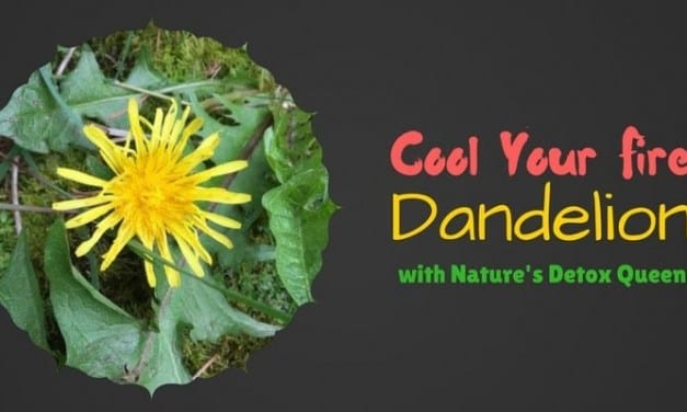 Dandelion Energetics: Cool and Dry Detox Queen