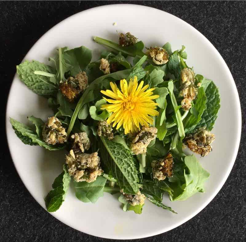 Herbal Activism At Home: Power To The Dandelion!
