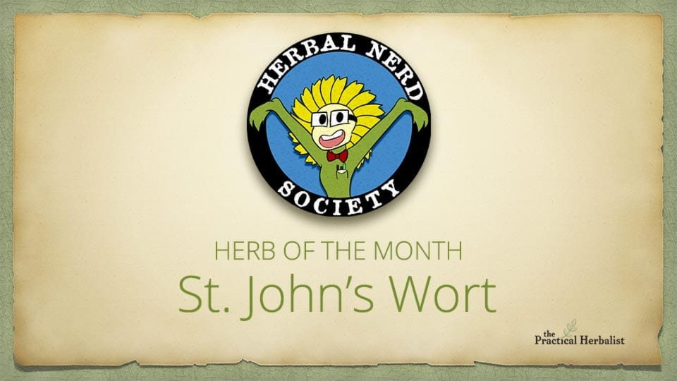Herb Of The Month: St. John's Wort
