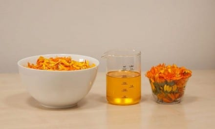 Flavonoids in Calendula – How it Works
