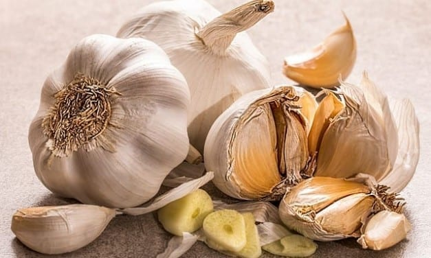 Garlic Energetics for Ayurveda, TCM, Western Herbalism