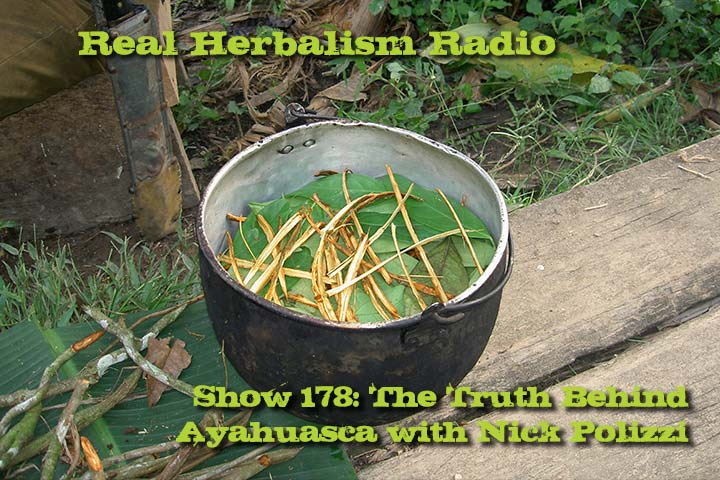 178.Ayahuasca: The Truth Behind This Grandmother Plant with Nick Polizzi