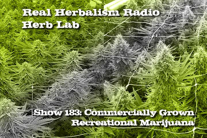 Commercially Grown Recreational Marijuana Herb Lab – Show 183