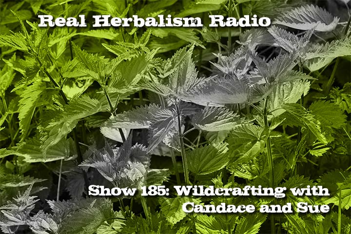 185.Wildcrafting Herbs with Candace and Sue