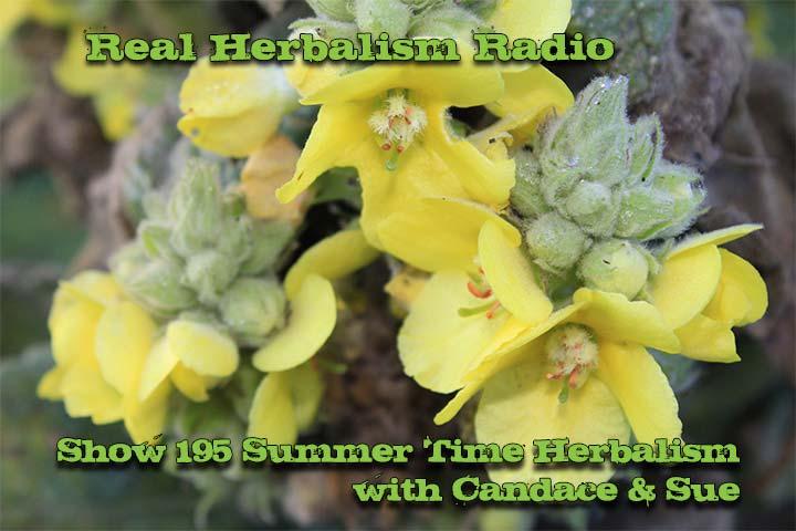 Summer Time Herbalism