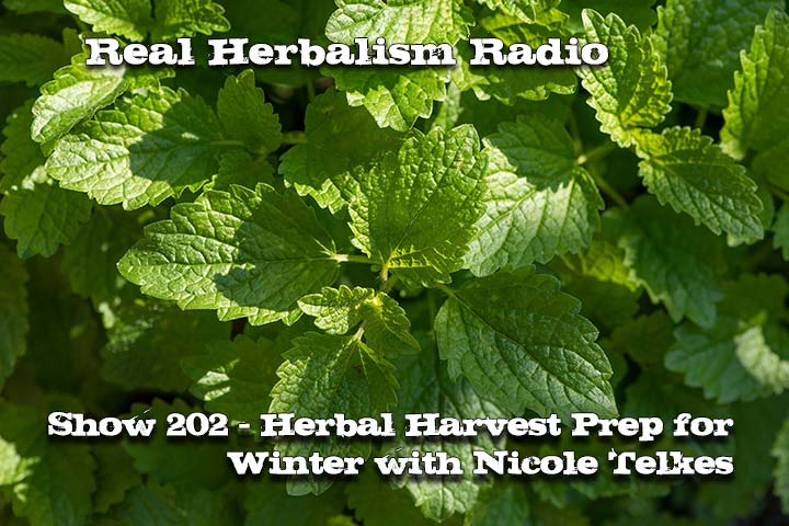 202.Herbal Harvest Prep for Winter with Nicole Telkes