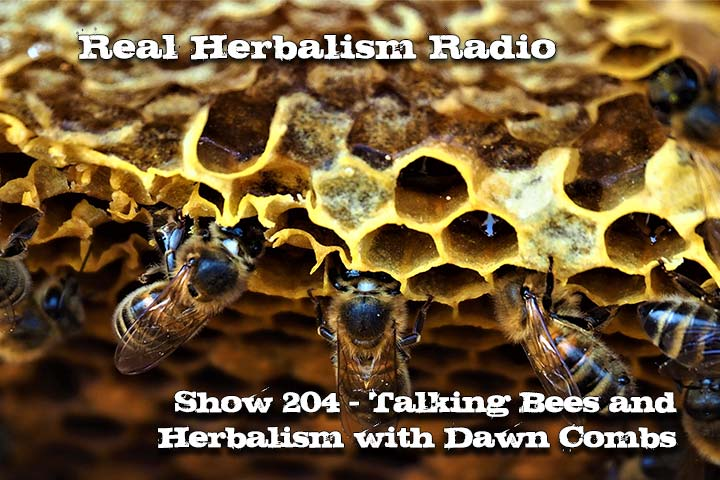 Bees And Herbs With Dawn Combs