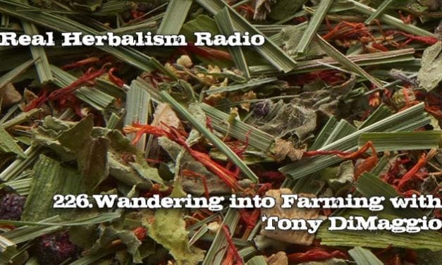 226.Wandering into Farming: Tony DiMaggio, Sacred Blossom Farm